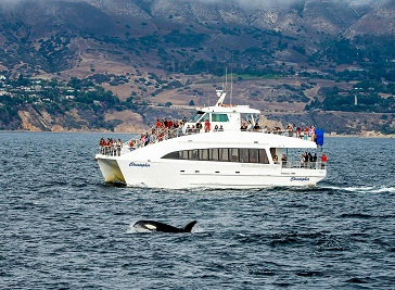 Harbor Breeze Cruises Whale Watching
