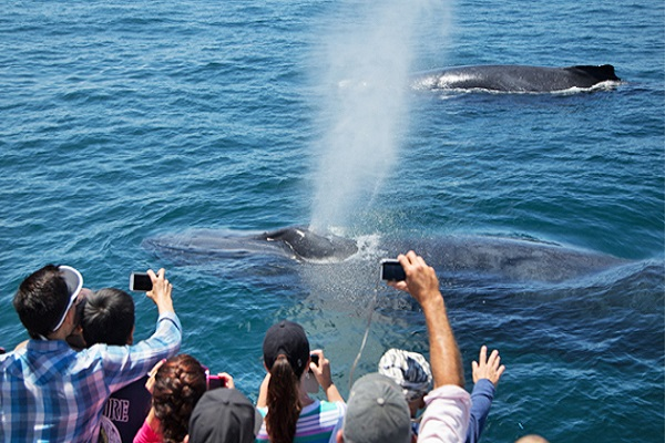 Best Whale Watching Tours Los Angeles